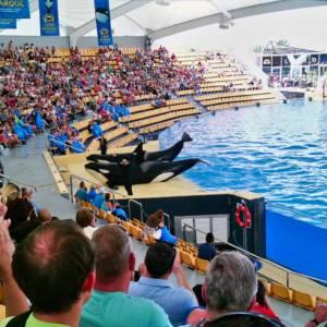 Lo spettacolo delle orche al Loro Parque